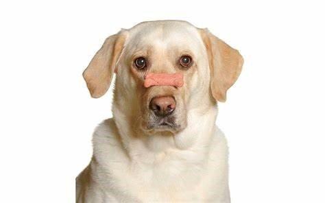 dog-holding-treat-nose